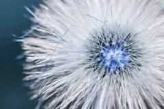 Härliga lösa blommor i skogmakroskott Arkivfoton