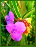 Härliga lösa små tryck för konst för tapet för blommamakrobakgrund royaltyfria bilder
