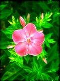 Härliga lösa små tryck för konst för tapet för blommamakrobakgrund arkivfoto