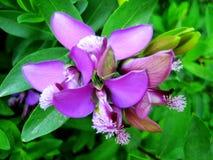 Härliga lösa små tryck för konst för tapet för blommamakrobakgrund arkivbilder