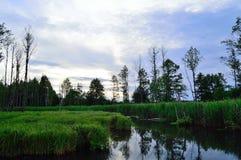 Härliga landskap av naturen av Vitryssland Royaltyfri Bild
