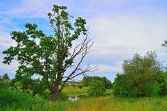 Härliga landskap av naturen av Vitryssland Fotografering för Bildbyråer