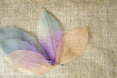härliga leaves Royaltyfri Fotografi