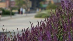 Härliga lila blommor i parkerar lager videofilmer