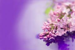 Härliga lila blommor i trädgården reflekterad i vatten Purpurf?rgad bakgrund kopiera avst?nd fotografering för bildbyråer