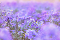 Härliga lilablommor Arkivfoto