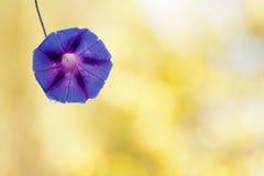 härliga liten droppe blommar purpurt vatten Royaltyfri Fotografi