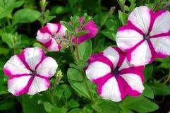 härliga ljusa blommor arkivbild