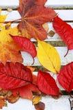 Härliga ljusa höstliga leaves royaltyfri bild