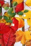 Härliga ljusa höstliga leaves Arkivfoton