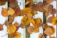 Härliga ljusa höstliga leaves Royaltyfria Foton