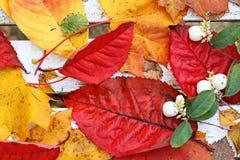 Härliga ljusa höstliga leaves royaltyfri foto