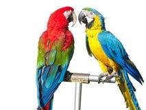 härliga ljusa kulöra macawspapegojor två royaltyfri bild