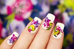 Härliga mång--färgade blommor. royaltyfria bilder