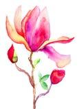 Härliga Magnoliablommor Fotografering för Bildbyråer