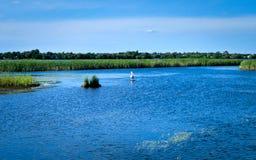 Härliga Mississippi River flödar north i Bemidji Minnesota royaltyfri fotografi