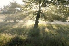 Härliga morgonsolstrålar till och med trädsidor arkivfoto