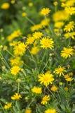 Härliga naturliga blommor Royaltyfri Foto