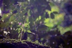 Härliga naturliga blommor Royaltyfri Bild