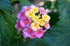 Härliga naturliga blommor Arkivfoton