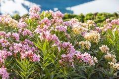 Härliga naturliga blommor Arkivbild