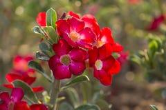 Härliga naturliga blommor Royaltyfria Bilder
