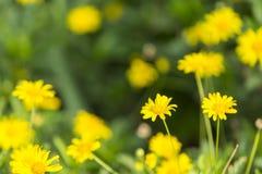 Härliga naturliga blommor Fotografering för Bildbyråer