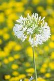 Härliga naturliga blommor med suddighet Royaltyfria Bilder