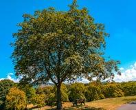 Härliga naturliga parkerar av Rheinaue i Bonn, Tyskland royaltyfria bilder