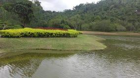 Härliga naturliga parkerar av Sri Lanka royaltyfri foto