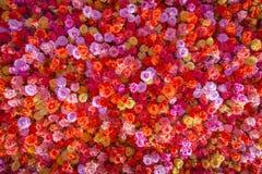 Härliga naturliga röda rosor blommar bakgrund för speciala tillfällen Royaltyfria Foton