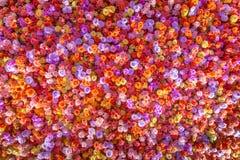 Härliga naturliga röda rosor blommar bakgrund för speciala tillfällen Fotografering för Bildbyråer