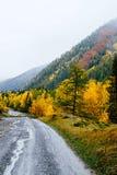 Härliga nedgångbladfärger och väg i berg Royaltyfria Bilder