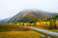 Härliga nedgångbladfärger och väg i berg Royaltyfri Foto