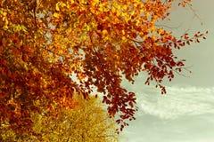Härliga nedgångträdfilialer, ljus bakgrund arkivbild