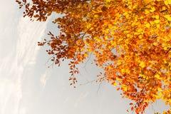Härliga nedgångträdfilialer, ljus bakgrund arkivfoton