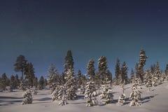 Härliga nordliga ljus över skog och snö-täckt tre Arkivbilder