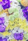 Härliga nya olika typer av färgrik blommabakgrund Arkivbilder