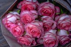 Härliga nya rosa rosor royaltyfria bilder