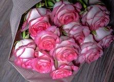 Härliga nya rosa rosor royaltyfri fotografi
