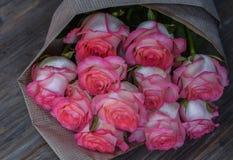 Härliga nya rosa rosor royaltyfri bild