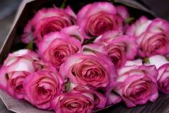 Härliga nya rosa rosor arkivfoto