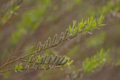Härliga nya nya sidor i vår på en naturlig bakgrund Arkivfoto