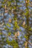 Härliga nya nya sidor i vår på en naturlig bakgrund Royaltyfri Foto