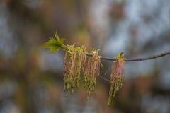 Härliga nya nya sidor i vår på en naturlig bakgrund Royaltyfri Fotografi