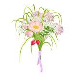 Härliga och eleganta rosa färgblommor som isoleras på vit bakgrund royaltyfri illustrationer