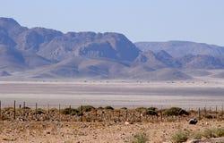 H?rliga och f?rgrika berg av Namibia royaltyfri fotografi
