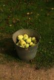 Härliga och smakliga organiska äpplen Arkivfoto