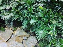 Härliga och trevliga växter arkivfoto