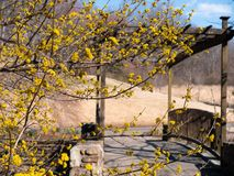Härliga och vibrerande gula blommor som markerar ingången till ett väder och en åldrig bro royaltyfria bilder